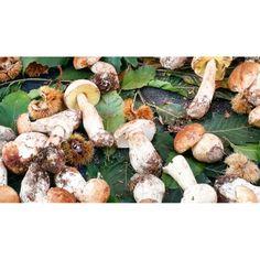 Mushroom Rocca di Papa #ridieassapori #fuoridalraccordo #italia365 #italygram #instatravel #experienceblog #foodpic #igerslazio #igersroma #ig_lazio_ #igworldclub #italiasocial
