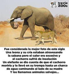 4 servilletas África/'s Fig five-león elefante búfalos rinoceronte Leopard