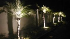 Palm Tree Uplighting Home Landscape Palm Trees