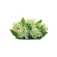 tubes fleurs / bouquets - Blog de l'ile de kahlan ❤ liked on Polyvore