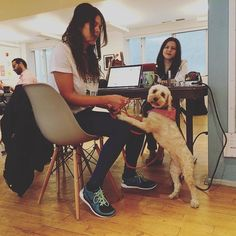 There's a new sherif in town at @projectspaces and her name is Soho  #toronto #yyz #the6ix #6ix #coworking #community #collaboration #dog #puppy #dogsofinstagram #pet #office #sharedoffice #space #officespace #work #workspace #startup #startups #startuplife #startupnorth #entrepreneur #entrepreneurship #startuphereto #freelance #freelancer #hustle #productivity #business