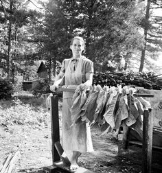 July 1939, Granville County, North Carolina. Wife of tenant farmer, Mrs. Oakley, works stringing tobacco during the harvest season. Dorothea Lange LC-USF34-020039-E www.loc.gov #American #History #NorthCarolina