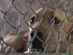 DOG POUNDS-killing pets for population control: Expensive, heartbreaking