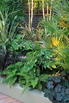 tropical garden ground cover plants for modern gardens Small Tropical Gardens, Tropical Garden Design, Tropical Landscaping, Tropical Backyard, Tropical Plants Uk, Plants For Small Gardens, Landscaping Ideas, Ferns Garden, Garden Shrubs