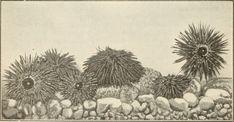 Sea Anemone, Painting, Decor, Art, Art Background, Decoration, Painting Art, Kunst, Paintings