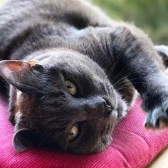 Grace ❤🐘 #mygreatcat #my_loving_pet #cat #gatto #catoftheday #catsofinstagram #catstagram #gatti #instacat #instacat_meows #bestmeow #topcatphoto #miao #catlover #gatto #catoftheday #katze #gato #chat #猫  #neko #猫好き #Exellent_Cats #子猫 #プッシーキャット #ニャー #甘い #愛猫