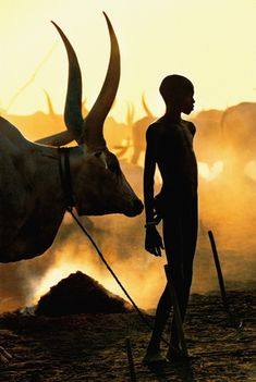 Young Dinka Herder with Ox by  Angela Fisher and Carol Beckwith