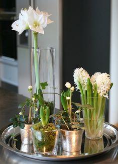 Spring bulbs on silver tray