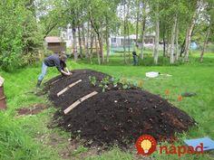 4 roky neviem čo sú hnojivá a úrodu nestíham míňať aj keď je slabý rok: Dajte si do záhrady tento starý zázrak - nestojí to nič a slúži celé roky!