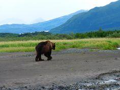 Katmai Peninsula, Alaska.  Tour with Alaska Bear Adventures out of Homer, Alaska.