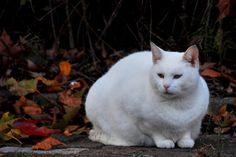 Animals in Dordrecht, Netherlands (nice cat street) - a photo by grannychristina