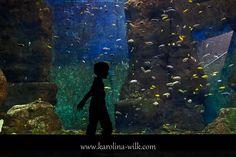 Wycieczka do Afrykarium - Karolina Wilk - Fotografia