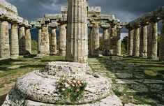 ✮ The Doric columns of the Greek temple dedicated to Hera at Paestum