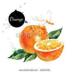 Hand drawn watercolor painting on white background. Vector illustration of fruit orange