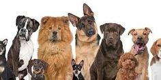 Tasmai Uppin, Author at BarkPost German Shepherd Dogs, Scooby Doo, Goats, Labrador Retriever, Cow, Animals, Bill Nye, Shape, Happy
