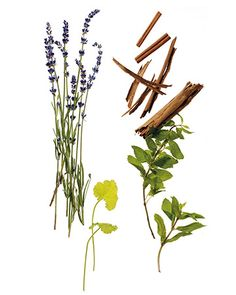 DIY Natural Scents for Your Home