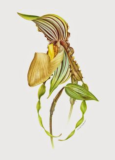 """eunike nugroho 