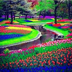 Keukenhof Garden, Lisse - one of my favorite places in Holland! Every year it's different and oh so beautiful!
