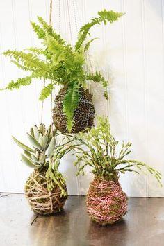 DIY: Lassen Sie Ihre Pflanzen schweben! So macht man Kokedamas