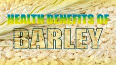 Barley is a major cereal grain, commonly found in bread, beverages, and various cuisines of every culture. At Home Workout Plan, At Home Workouts, Korn, Barley Health Benefits, Noni Fruit, Netflix Gift Card, Salad With Sweet Potato, Dog Food Recipes, Cooking Recipes