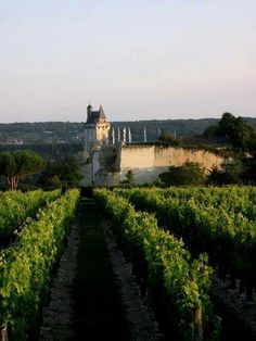 La fortaleza real de Chinon Los viñedos de Touraine Valle del Loire