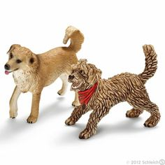 dogs (Canis lupus familiaris)    Mixed breed dogs are loyal and intelligent animals.