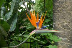 mano's welt: botanischer garten braunschweig