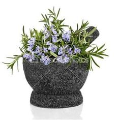 """""""The Herb Rosemary-Did you Know?""""the herb Rosemary.  The facts and health benefits of the Natural herb Rosemary. Helps cancer, stress, allergies, asthma, is an anti inflammatory, detoxifies, and antibacterial.   READ MORE @ www.organic4greenlivings.com"""