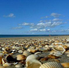 so. many. shells.