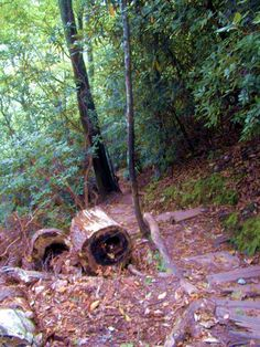 Narrow hiking trails