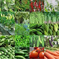 Paket benih combo 1000 ( sayur buah bunga herbal dll ) Lengkap