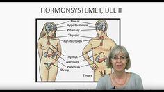 Det endokrine systemet: Hypotalamus