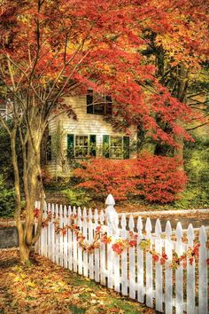 Beautiful fall decor and scenery Beautiful Places, Beautiful Pictures, House Beautiful, Beautiful Flowers, Autumn Scenes, All Nature, Happy Fall Y'all, Fall Pictures, Autumn Home