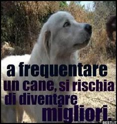 A frequentare un cane | BESTI.it - immagini divertenti, foto, barzellette, video Love And Co, My Love, Animals And Pets, Cute Animals, Feelings And Emotions, Animal Quotes, Little Dogs, Deep Thoughts, I Love Dogs