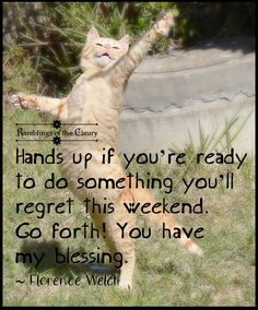 Hands up if you're ready to do something you'll regret this weekend. Go forth! You have my blessing. #weekend #mischief #cats #lolcats #funny #humour #Caturday