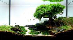 natural looking freshwater aquariums | Freshwater Aquariums | Blessings Aquarium Shoppe