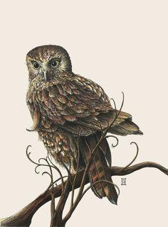 Morepork - New Zealand Owl Tui Bird, Beautiful Artwork, Beautiful Gif, Nz Art, Wild Honey, Reptiles And Amphibians, Bird Pictures, Pretty Birds, Cute Owl