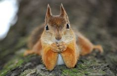 Attentive squirrel at your service.