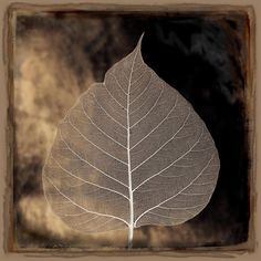 Aspen Leaf :  The aspen tree is symbolic of determination and overcoming fears and doubts. This tree serves as a reminder that with determination and deep roots of love, forgiveness, mercy, and grace we can overcome all hardships in life.