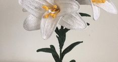 """Perhaps the most famous and revered flower since ancient times. The """"Lily di Sant'Antonio"""" is the symbol of purity, virtue and innoc..."""
