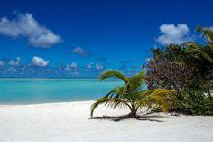 maldives beach  sea shore ocean palm trees sand