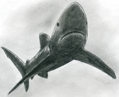 how-to-draw-shark09.jpg (852×696)