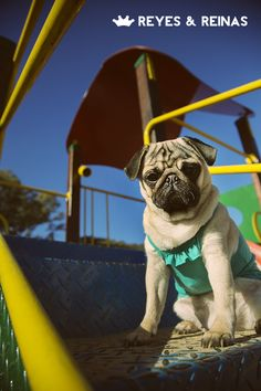 Primavera Verano / Pug / Jack Russell Terrier / Poodle / Caniche / Plaza / Juegos / Park / Happy dog / Fashion Dogs