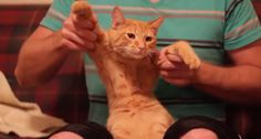 Entérate Cali: Gato Dubstep - La verdad es muy bueno... Jajaja !!...