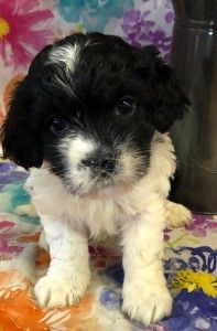 Adopt Gee Gee On Pet Adoption Dog Spay Adoption