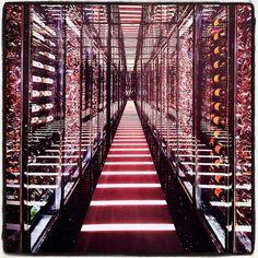 walkway of wine!