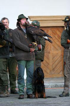 Czech-Falconry-Birds-Hunting-Bohemian-Photo-69