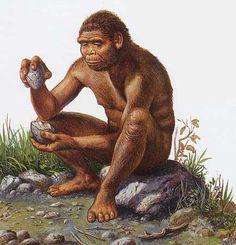 Homo habilis  apparu en Afrique il y a 2.5 M d'années.