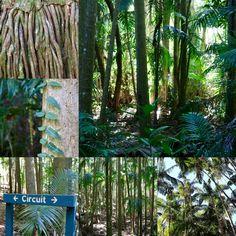 Tamborine National Park Queensland Australia