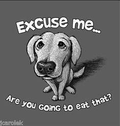 Dog T-shirt Excuse Me You Going to Eat That Cotton Blend S-M-L-XL-2XL NWT   | eBay